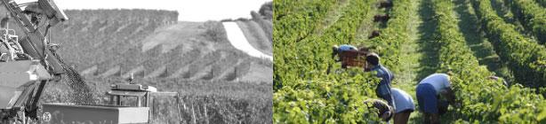 FRANCE WINE CONSULTING - Conseil en gestion de propriété viticole