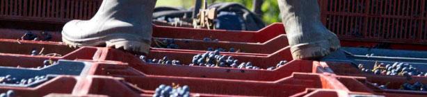 FRANCE WINE CONSULTING - Gestion de propriété viticole