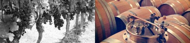 FRANCE WINE EXPORT - Les vignerons partenaires France Wine