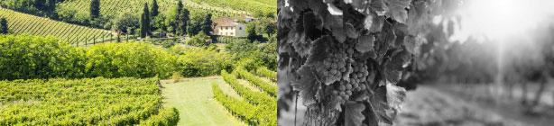 FRANCE WINE PROPERTIES