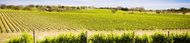 FRANCE WINE PROPERTIES - Vendre un vignoble